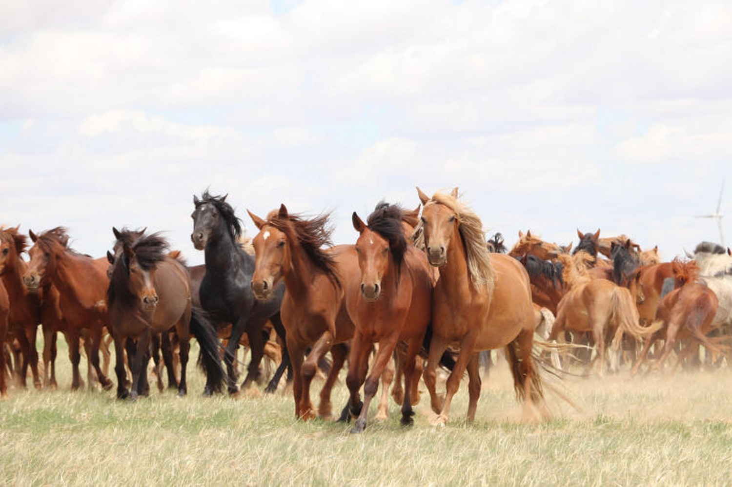 Study points to new origin for modern horses