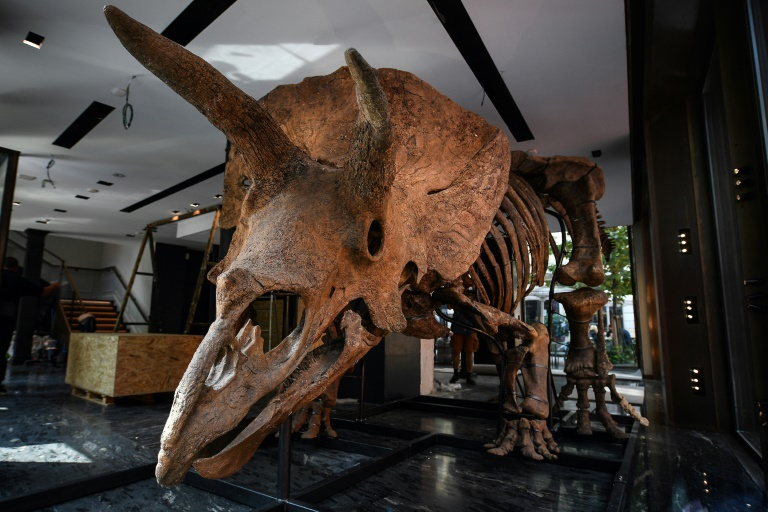 'Big John', world's largest triceratops, sells for 6.6mn euros