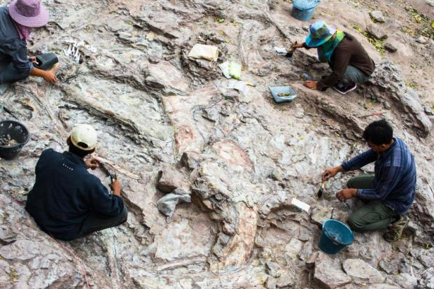 Between a rock and a hard place: Staff from Mahasarakham University work on a fossil excavation site in Isan, where dinosaurs roamed on lush floodplains more than 100 million years ago.