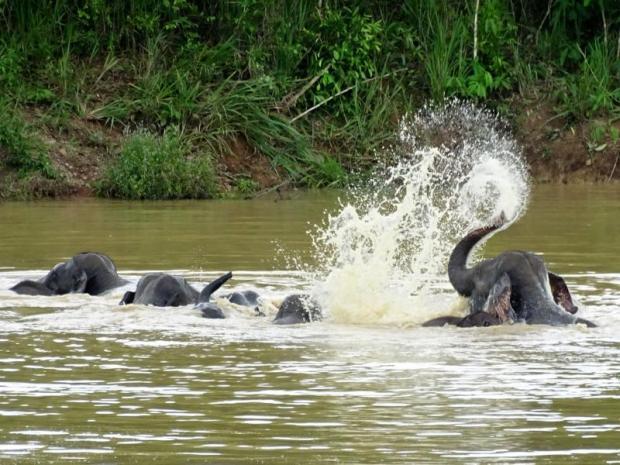 Cooling off: Elephants play in the water at Kui Buri National Park. photo: Chaiwat Sardyaem