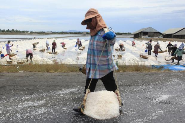 A female worker walks past a large field carrying salt in a basket. In the background, fellow workers are busy loading farmed salt into baskets. Large grains of sea salt are harvested and carried by the workers. (Photos by Phongthai Wattanavanitvut)