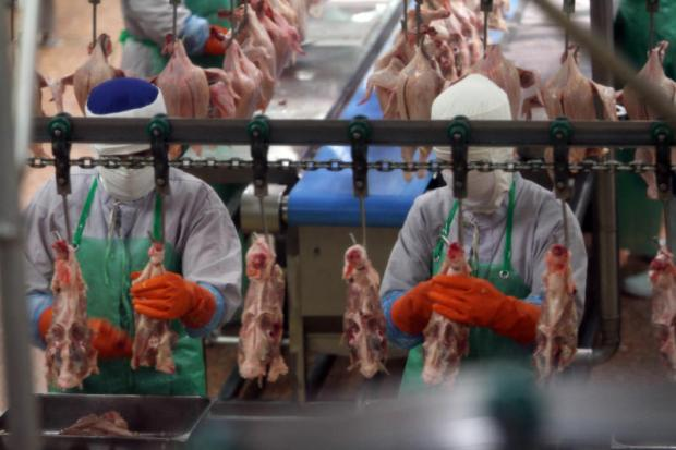 Workers process chicken meat at a plant in Nakhon Ratchasima. Thailand's poultry exports are forecast to show strong growth this year. APICHART JINAKUL