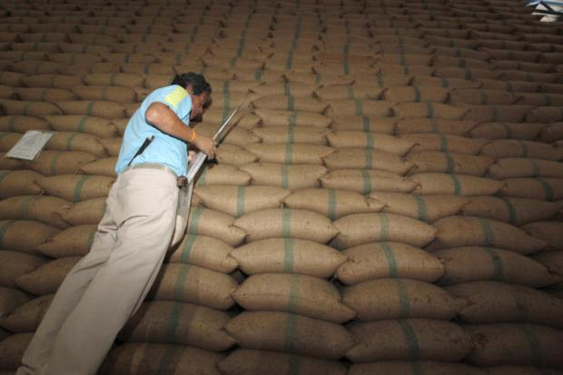A commerce official checks the quality of rice stocks at a warehouse in Bangkok's Khlong Sam Wa district. The Foreign Trade Department has called for the auction of 2.87 million tonnes of rice stocks fit for human consumption.PATTANAPONG HIRUNARD