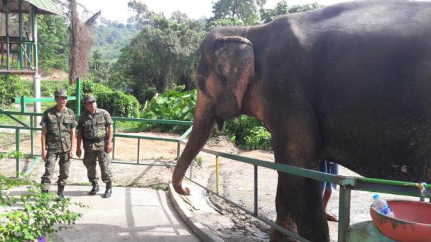 Soldiers look at an elephant a handler claims to be 'Phang Yo' at a Phuket safari park. The owner said it was kidnapped in 2003 while working in Krabi.Achadtaya Chuenniran