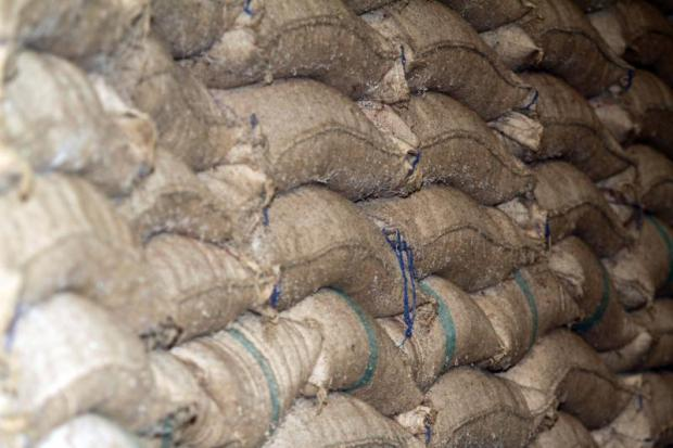 Decaying rice in storage at a warehouse in Nakhon Pathom. APICHART JINAKUL