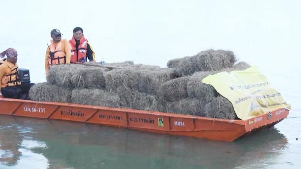 Grass and animal feed, bestowed by His Majesty the King, is ferried to Koh Donsawan in Muang district, Sakon Nakhon to feed buffaloes stranded there after heavy flooding.(Photo by Pratuan Kajornwuthinan)