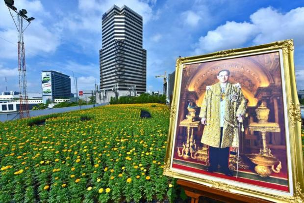 Siam Piwat has planted 55,500 marigolds inside and outside three shopping centres to commemorate King Rama IX.