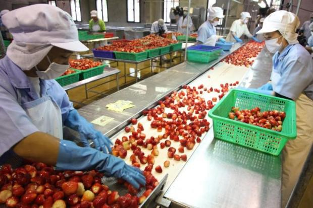 Staff at Doi Kham prepare fruit for processing at the company's plant in Sakon Nakhon province.