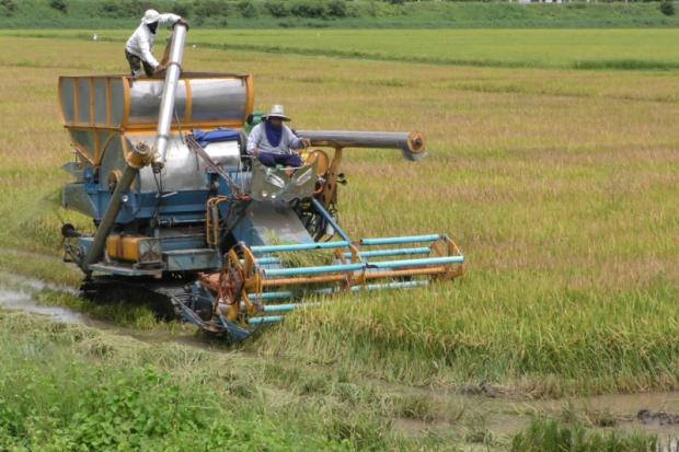 Farmers in Chai Nat tend to a rice paddy field. The FTI will launch a new business platform to aid rice farmers.