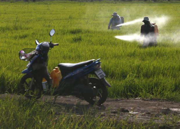 taken for a ride: Farmers work in the rice paddies of the central province of Chachoengsao. Hazardous waste has been found illegally dumped in several areas across the province. PHOTO: Pattarapong Chatpattarasill