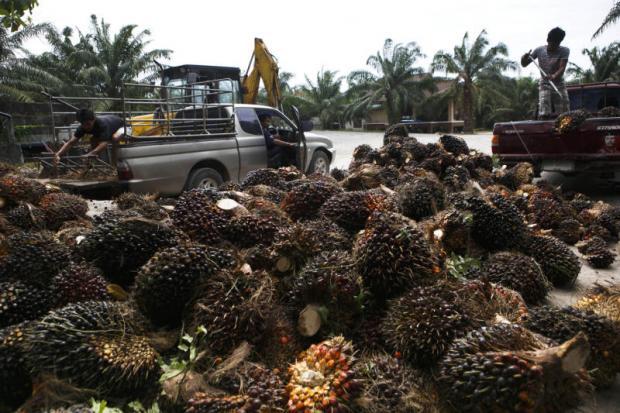 Palm fruit for sale at a market in Krabi province.SEKSAN ROJJANAMETAKUN