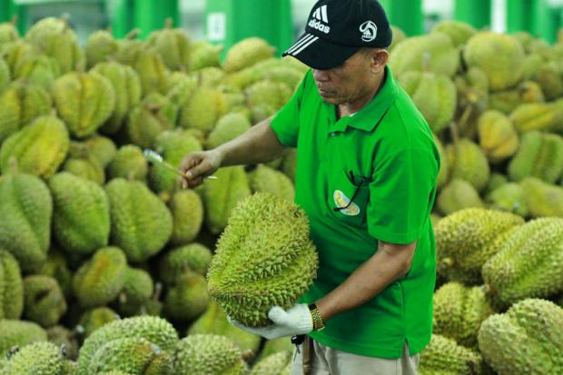 A man checks the quality of durian for export at Queen Frozen Co in Pathum Thani province. Fresh durian was one of 11 products removed from the US's GSP list on Thursday.(Photo by Pongpat Wongyala)