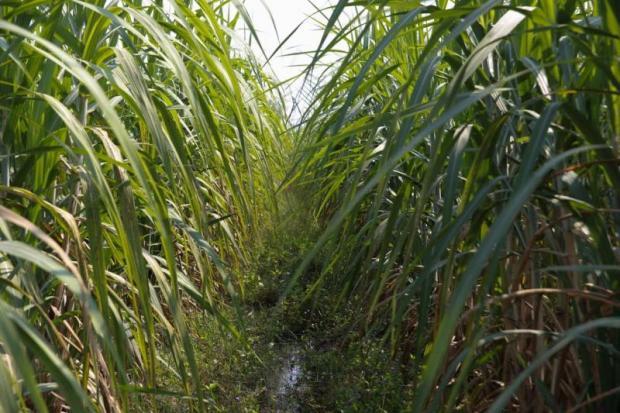 Sugar system overhaul at work