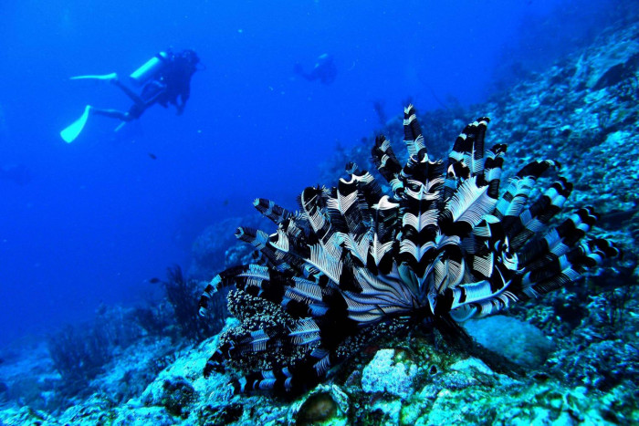 Tour operators want better marine protection system