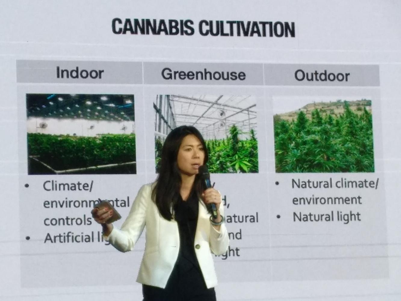 Ms Kelly talks about the potential economic boost from a legal cannabis industry in Thailand. (Photo by Tharittawat Samejaidee)
