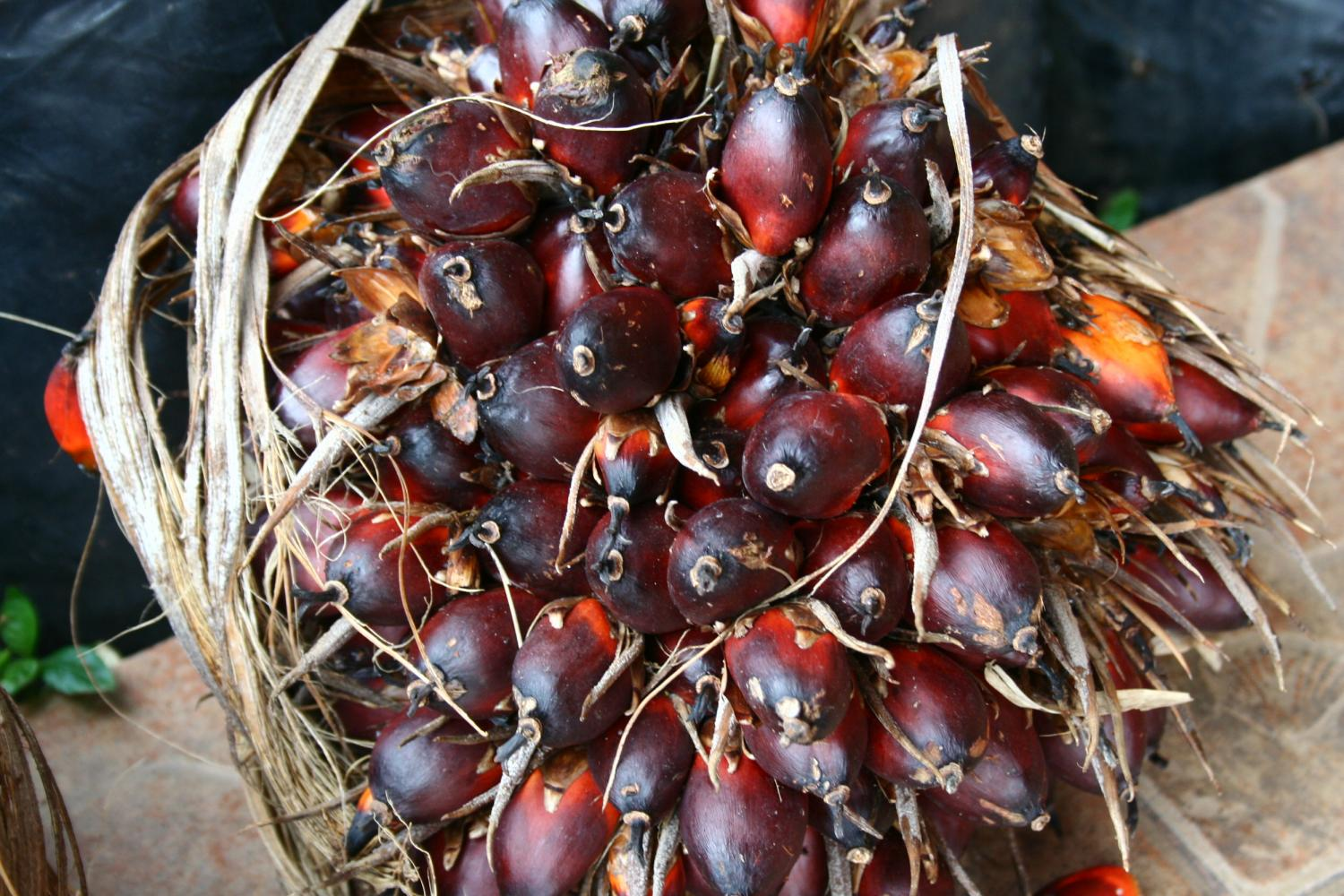 Palm oil prices have seen a decline in the past few months. (Photo by Theerawat Khamthita)