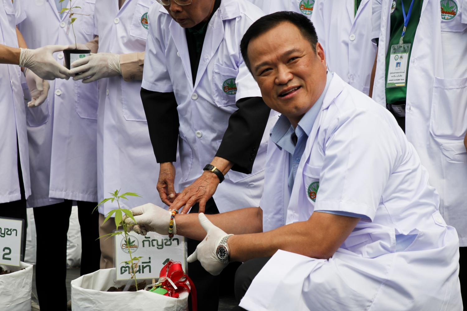 Inspecting the goods: Public Health Minister Anutin Charnvirakul attends a special cannabis planting ceremony at an organic farm in Chiang Mai's Maejo University. At least 12,000 cannabis sprouts have been planted.