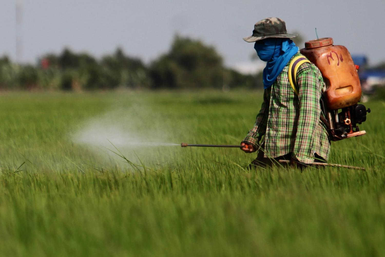 A farmer sprays herbicide at a rice field in Ayutthaya.WICHAN CHAROENKIATPAKUL