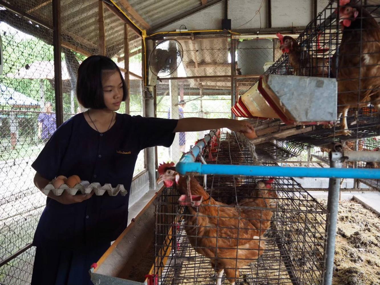 Honest business: Knasnan Apiwanasbordee, 14, a student at Ban Nong Phai school and a member of the school's farm club says she can make 2,500 baht a year selling organic eggs. The school in Nakhon Sawan province is famous for farm projects which follow His Majesty King Bhumibol Adulyadej The Great's Sufficiency Economy Philosophy.