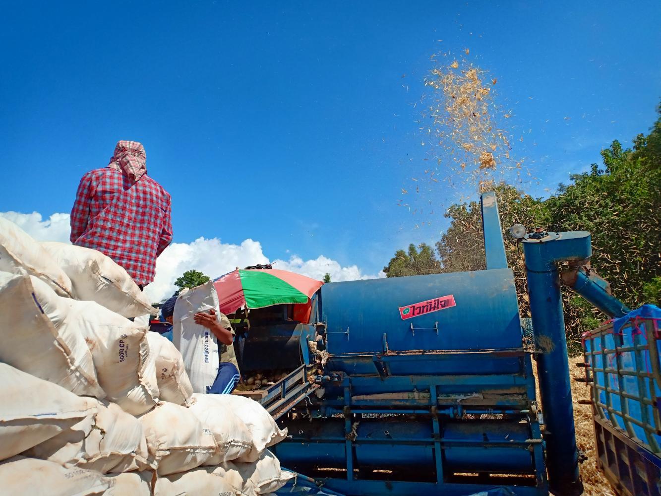 Farmers in Chiang Mai use a machine to make corn waste.photos by YUTHANA PRAIWAN