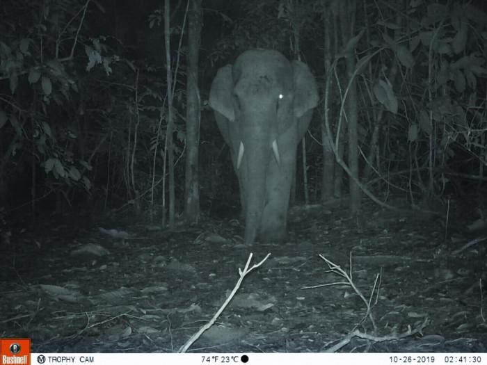More rare animals found in sanctuary - Bangkok Post