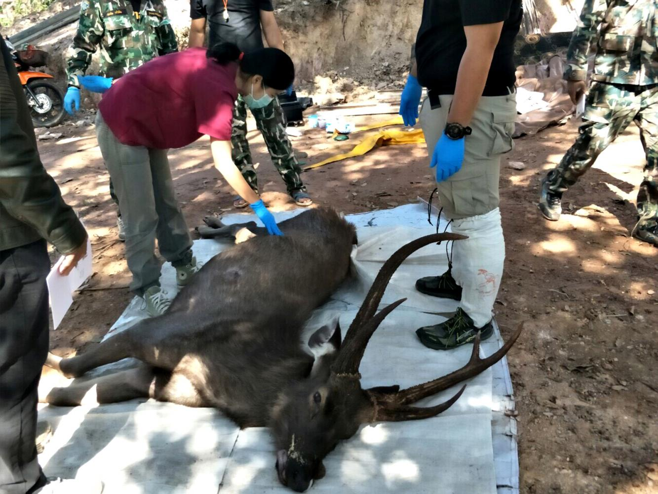 Plastic rubbish found in dead deer stomach