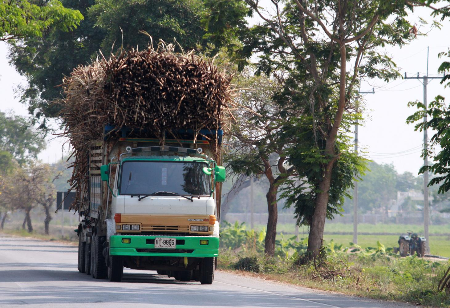 A truck loaded with freshly harvested sugar cane heads for the mill. Sugar-cane production from Dec 1, 2019 to Feb 15, 2020 stood at 7.4 million tonnes.(Photo b Thanarak Khunton)