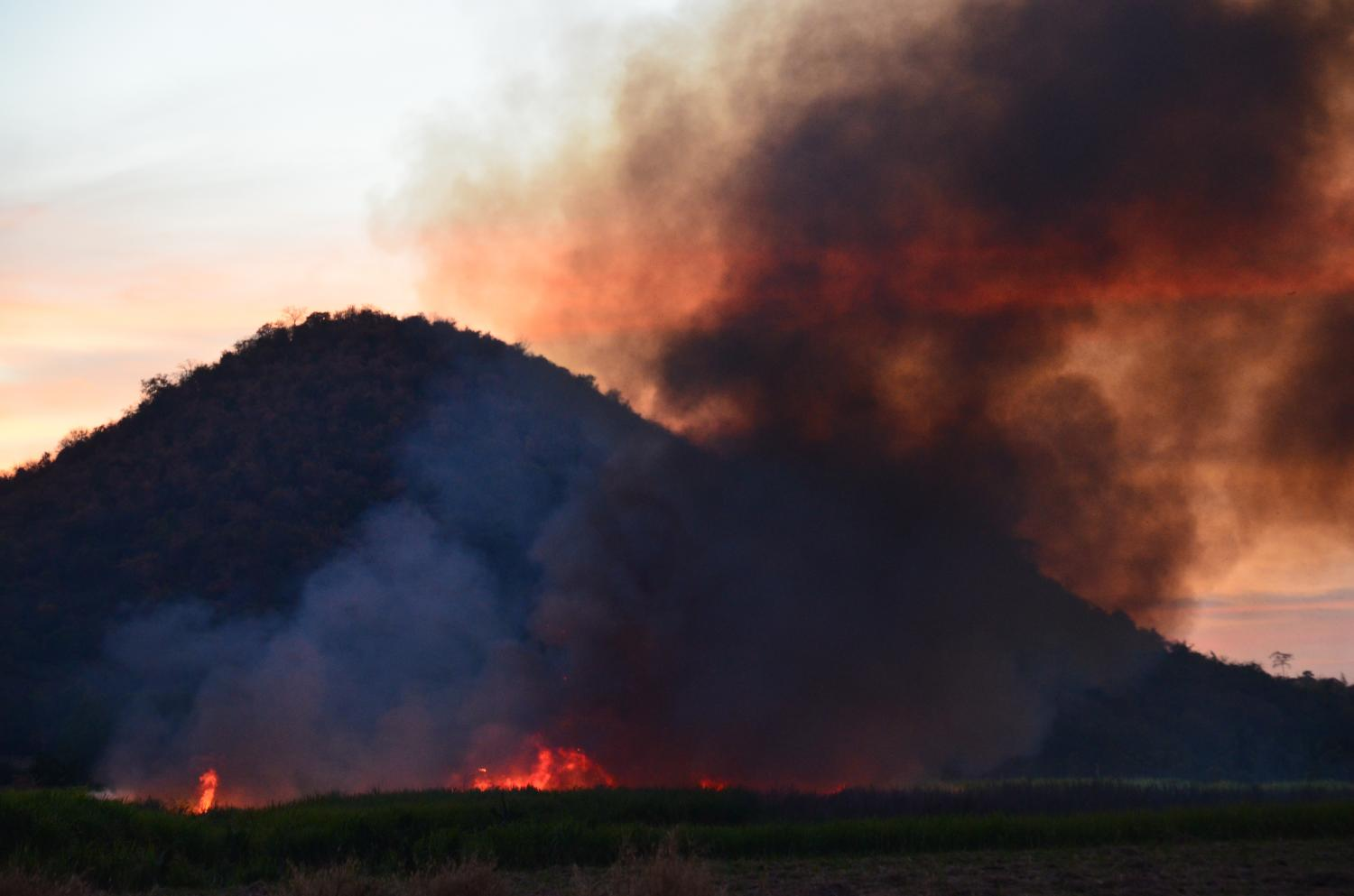 Fires started during sugarcane-harvesting season to clear land for the next crop have become a major environmental problem as more land has been set aside for cultivation.(Photo courtesy of community-support agriculture group)
