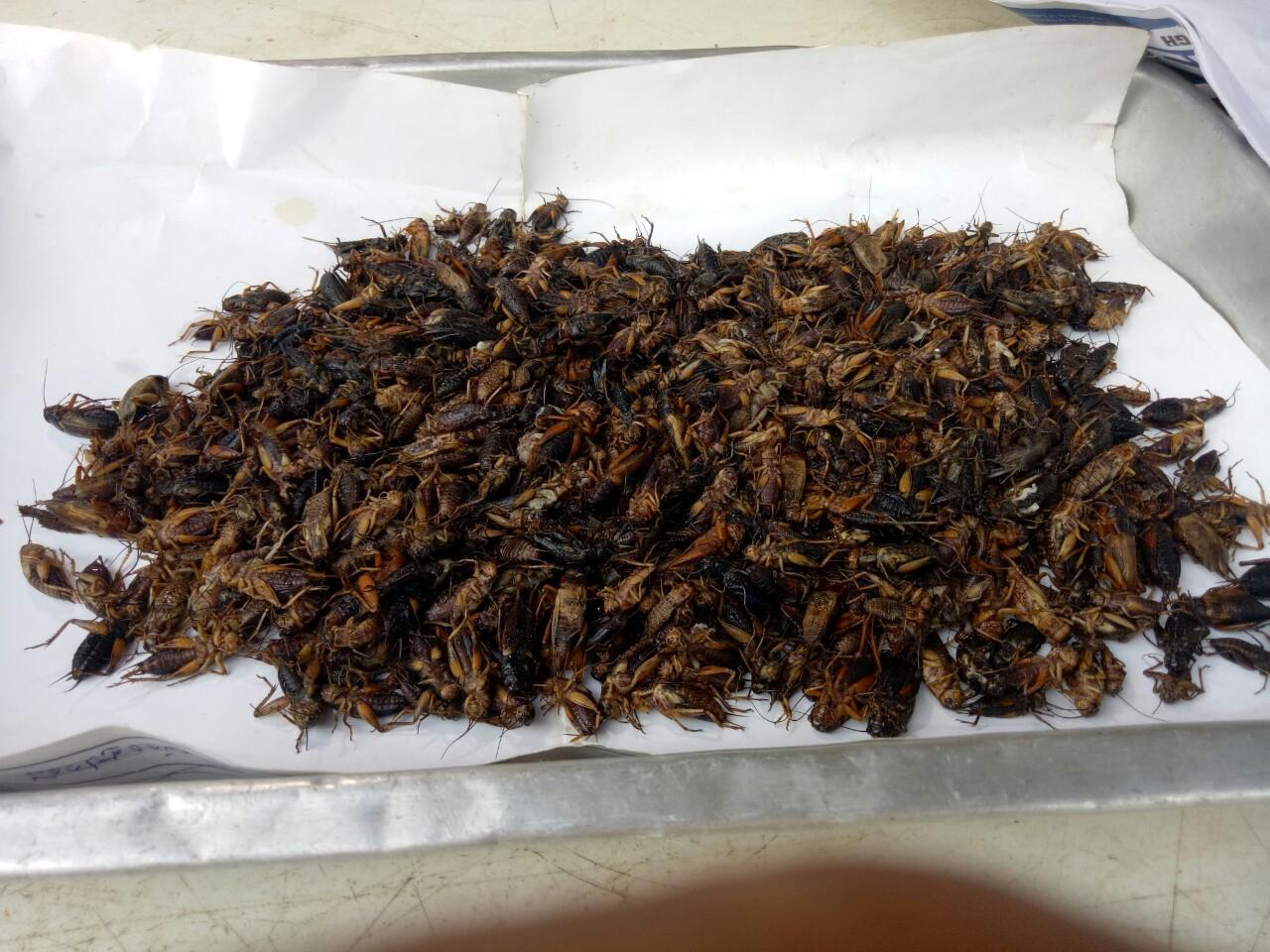 Dead crickets are about to be put in plastic bags to be sold to customers.(Photos by Phitsanu Thepthong)