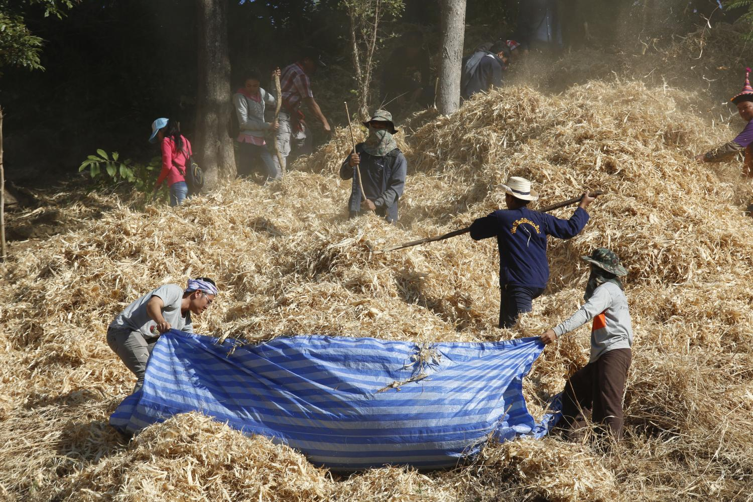 Locals in Nan cover soil with hay before pouring water on it, a sufficiency economy tecnique. (Photo by Pattarapong Chatpattarasill)