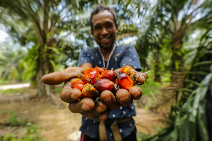 Making palm oil more sustainable