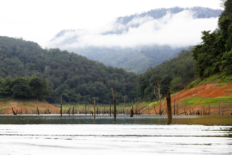 Asean park plan puts down roots