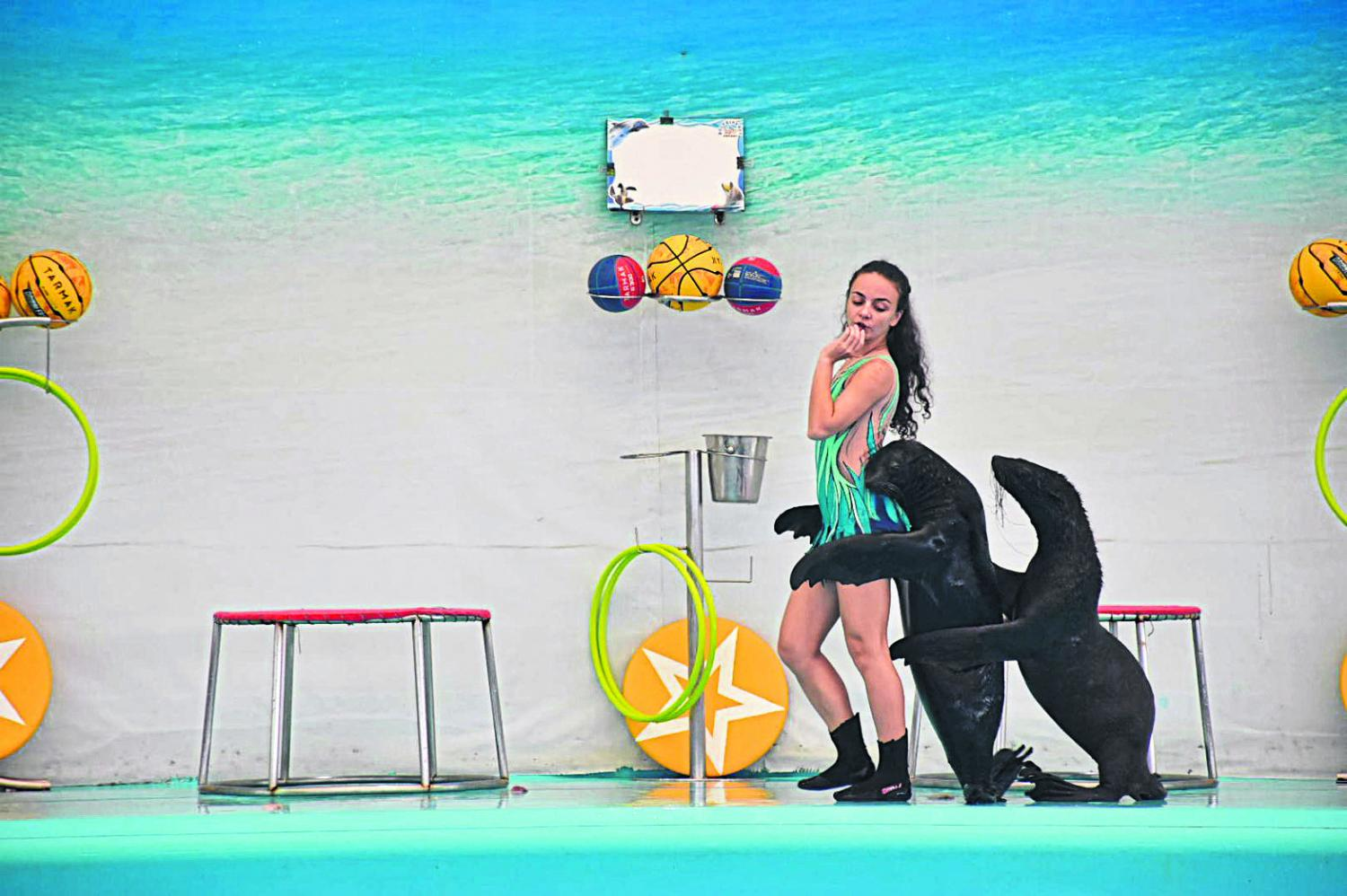 See Phuket's dolphins spring into action