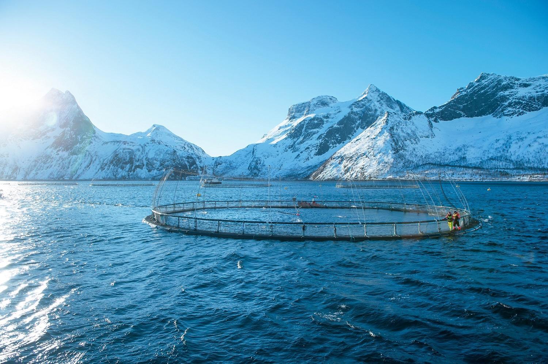 In Norwegian aquaculture salmon are raised in vast fish pens anchored to the seafloor.
