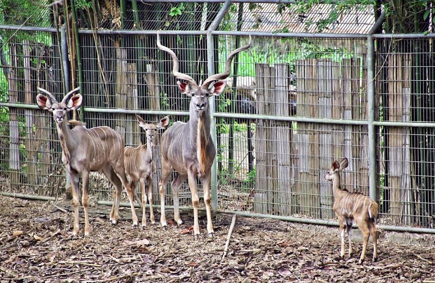 Baby joy for Chiang Mai zoo
