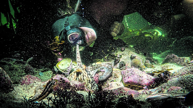 An underwater friendship