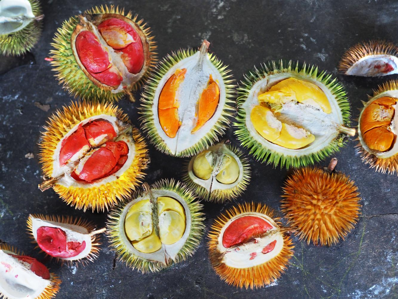 The year of the durian