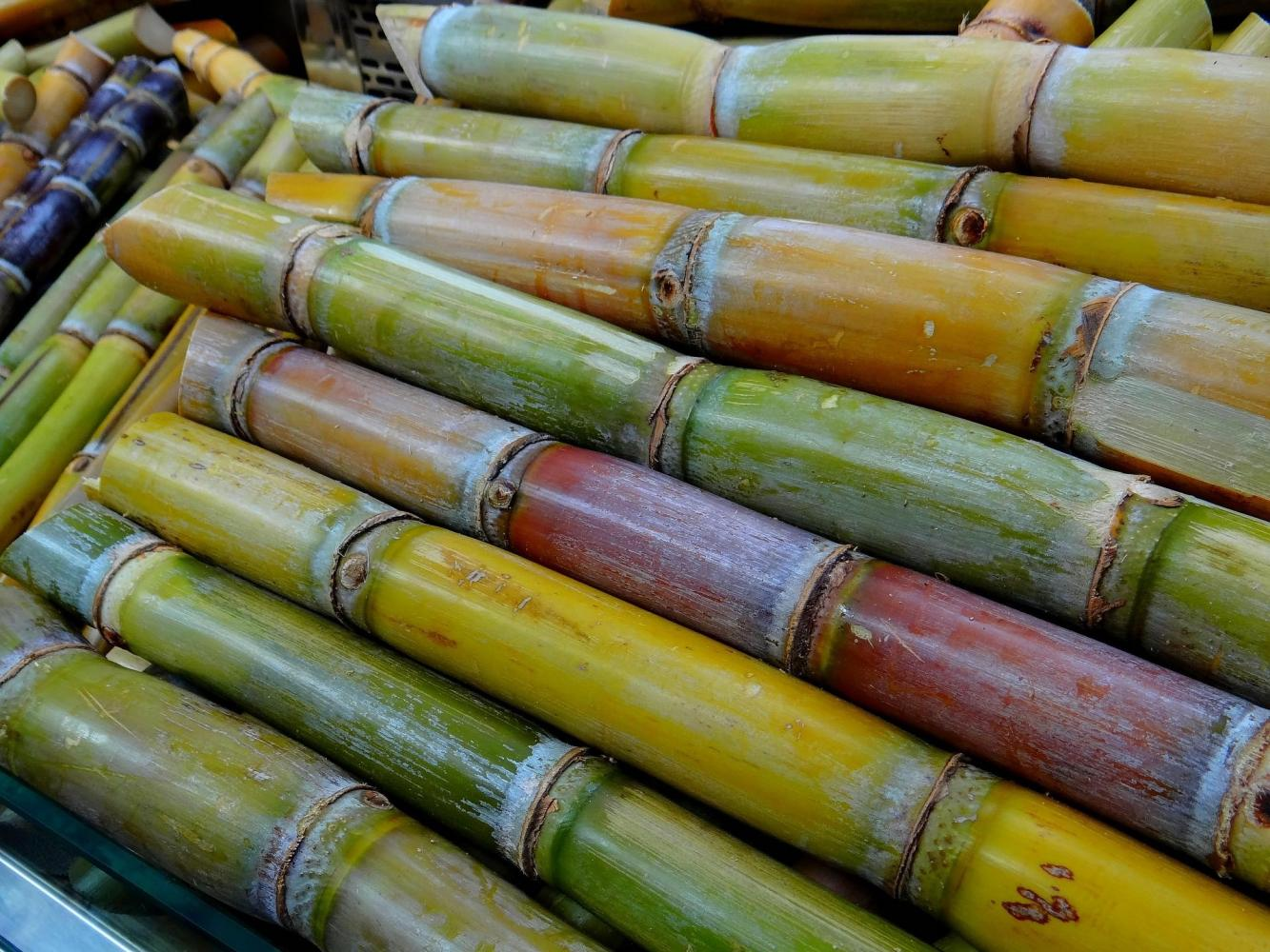 The Thai Sugar Millers Corporation anticipates the price guarantee will encourage farmers to grow more sugarcane.