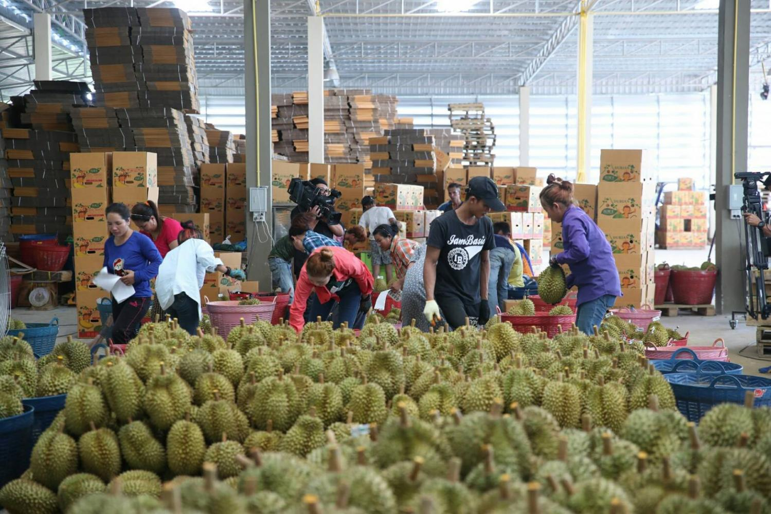 Workers pack durian into boxes for export. Thai exports expanded by 16.2% to $154.99 billion during the first seven months of 2021.
