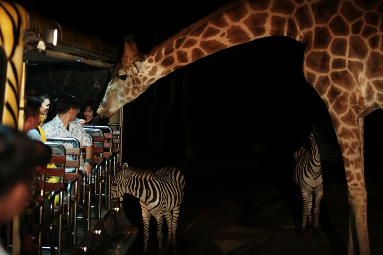 Chiang Mai Night Safari reopens